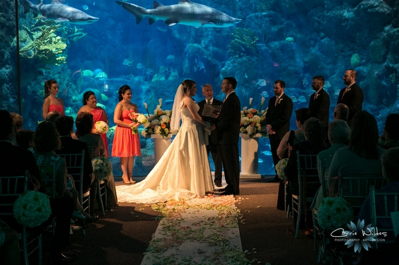 Aquarium Of The Pacific California Wedding Day